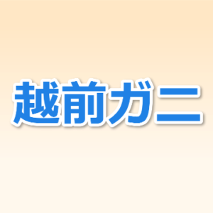 福井県敦賀市 越前ガニが買えるカニ直売所、日本海さかな街、甲羅組